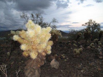 2008_11_27.._Cactus.jpg