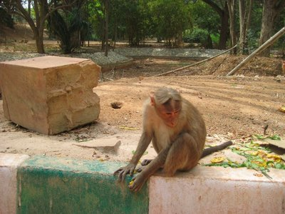 Monkey looking down at the Lalbagh botanical gardens