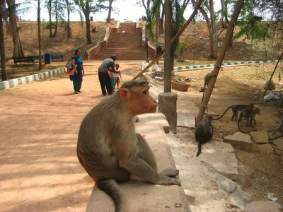 Monkey with a 1000 yard stare at the Lalbagh botanical gardens