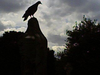 Creepy pigeons Brompton Cemetery