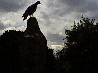 Creepy pigeons Brompton Cemetery