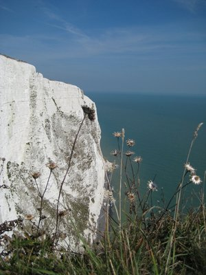 Flower and White Cliffs