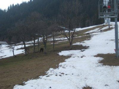 Horses_eat.._slopes.jpg