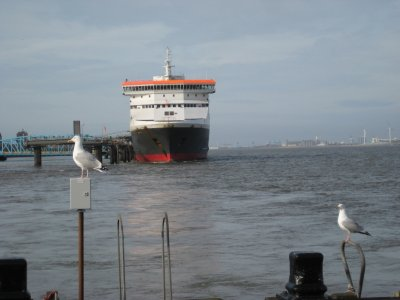 I017_Gulls_and_Ferry.jpg