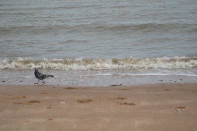 J010_Bird_and_Beach.jpg