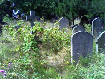 Overgrown Brompton Cemetery 2