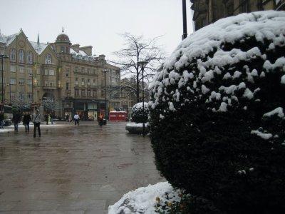 Snow_on_Bushes.jpg