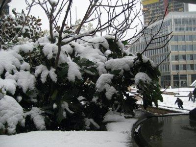 Snow_on_Trees.jpg