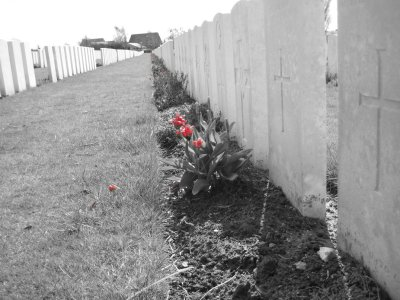Poppies Blow, Tyne Cot Cemetery