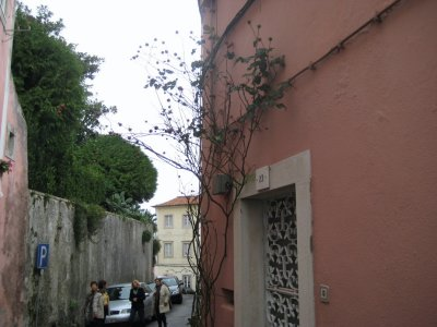 Tree_and_Pink_Walls.jpg