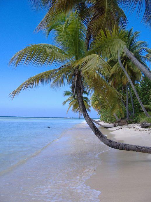 Palm tree at pigeon Point beach, Tobago