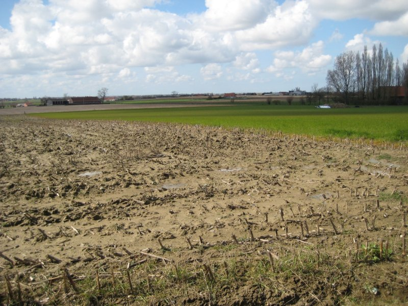 Muddy Fields in Passendale