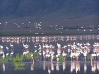 Flamingos on the pond  in Ngorongoro crater, Tanzania