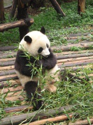 Hunan___Chengdu_696.jpg