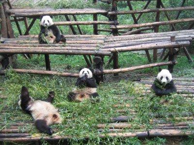 Hunan___Chengdu_729.jpg