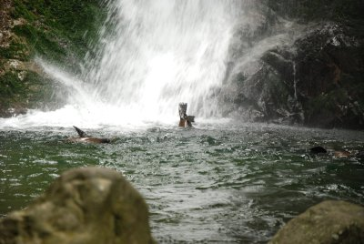 seal waterfall