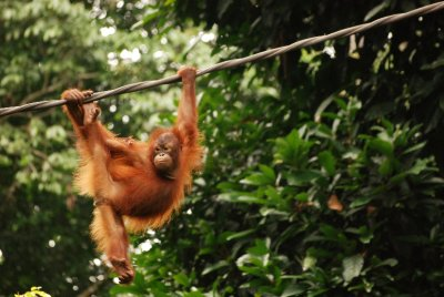 young orang
