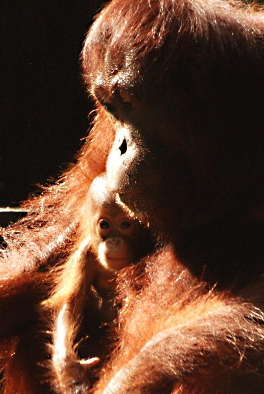 orang and baby 3