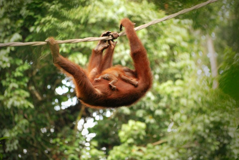 orang and baby rope