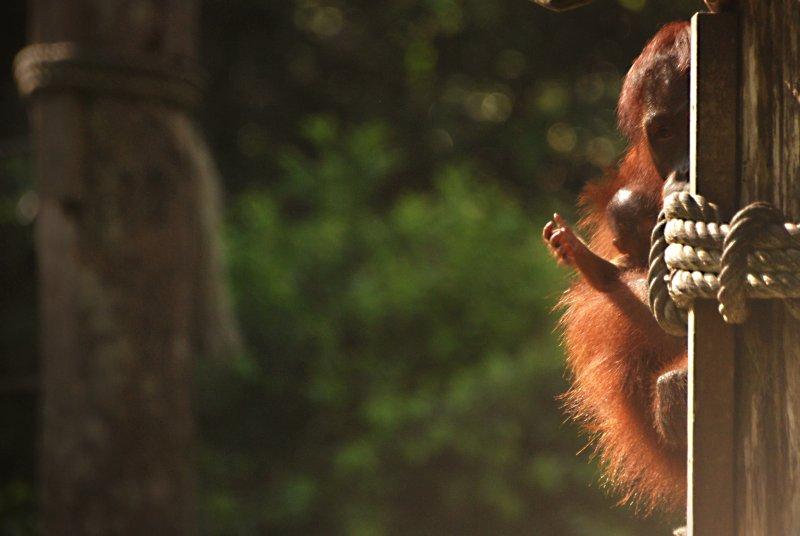 orang and baby 4
