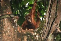 orang posing