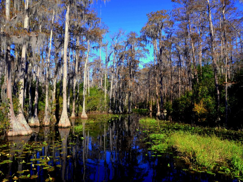 Okefenokee swamp