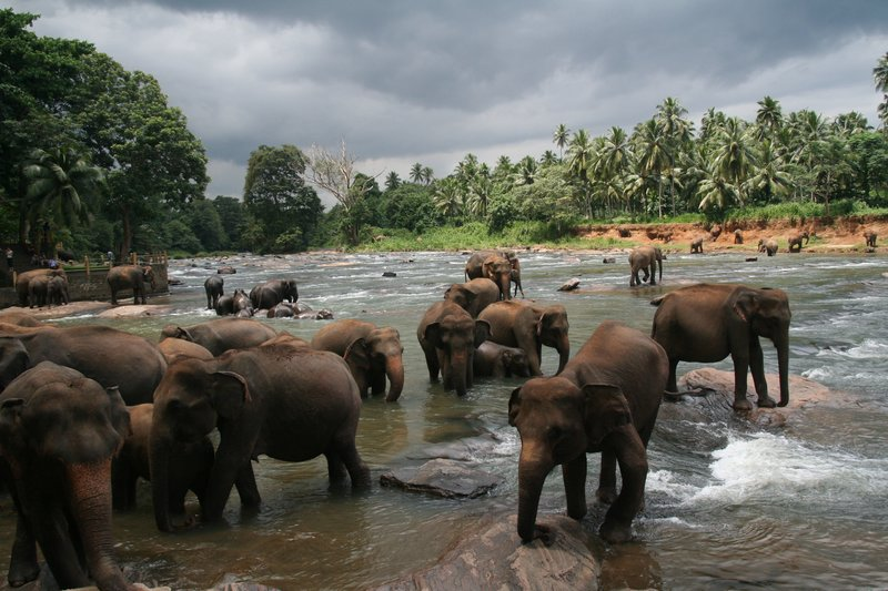 Pinnewala Elephant Orphanage
