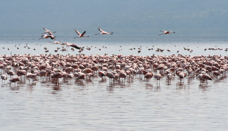 More Flamingo's