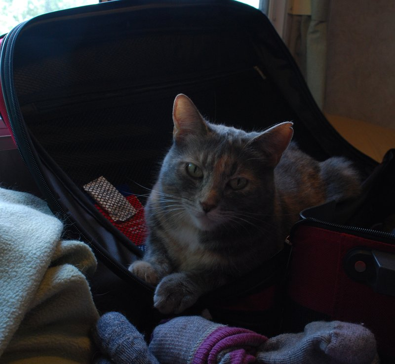 Willow is not happy the suitcase came out
