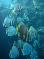 diving_sipadan_1-07.jpg