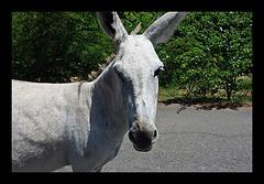 donkey3.jpg