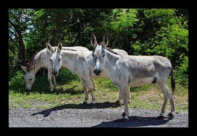 donkey_trio.jpg