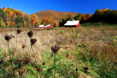 farm_photo.jpg