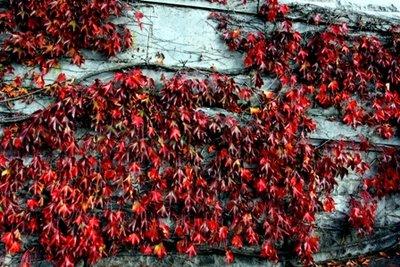 vines_wall.jpg
