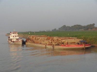 Unmengen von Teakholz werden sehr günstig nach China und Thailand exportiert