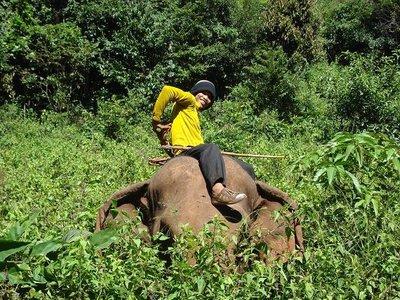 Elefantenr.._Nacken.jpg