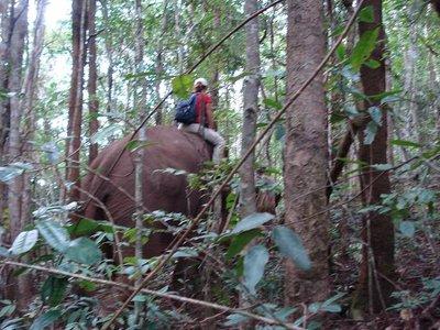 Elefantenr..ickicht.jpg