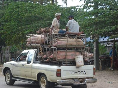Schweinetransport.jpg