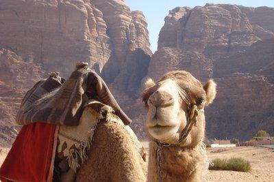 auch die Kamele leben hier!