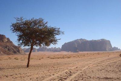 einsamer Baum in der Wueste
