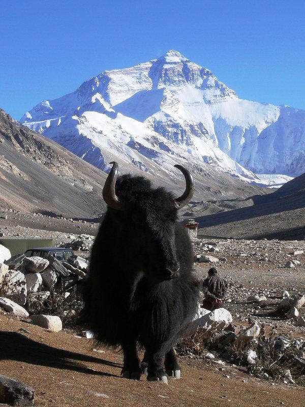 nepal mount everest高清图片