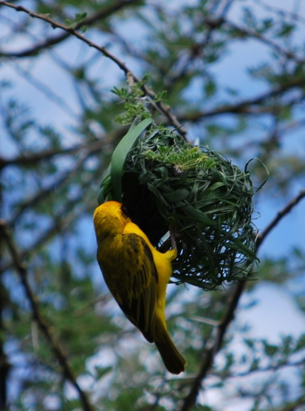 bird at Lake Manyara