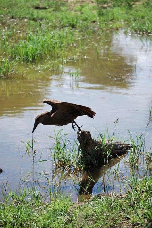 lake manyara.. a bird