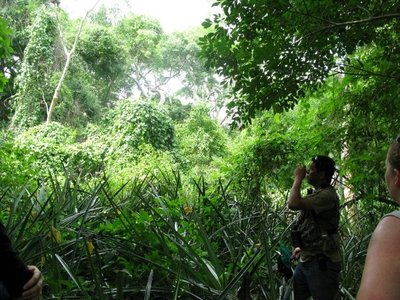 Pantanal_forest.jpg