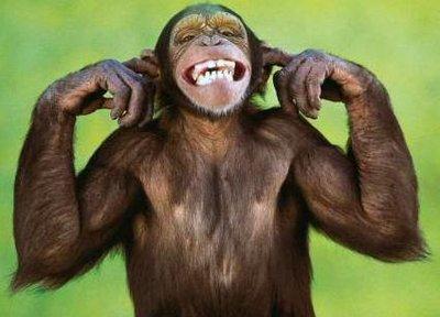 1funny_monkey.jpg