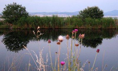 Kalochori, wetland
