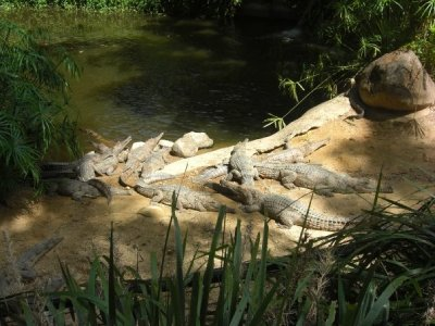 Krokodiller.jpg