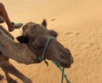 CamelFriend.jpg