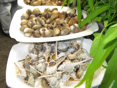mollusks_up_close.jpg