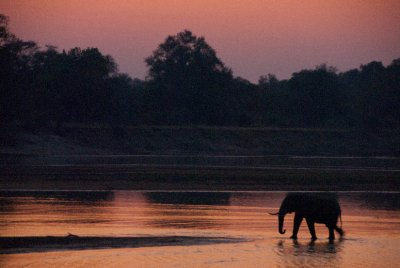 The elephants then crossed the river treating us to a beautiful sunrise vista.